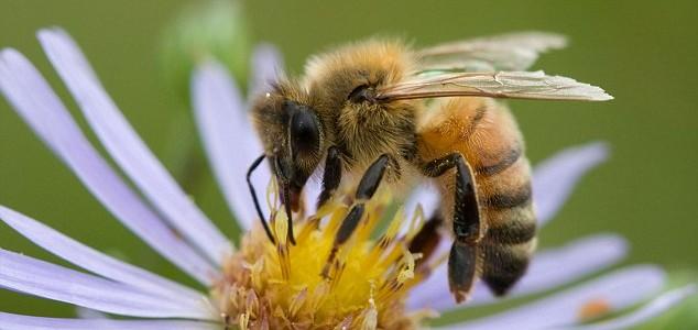 More Than Honey documentary film