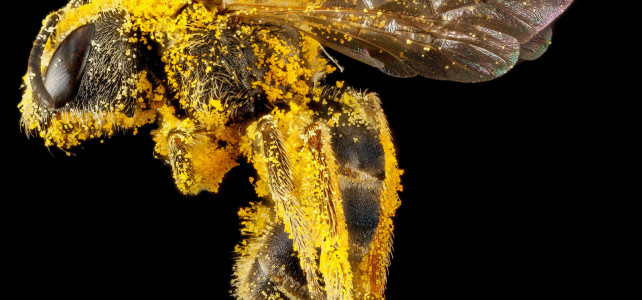 Beautiful, Intimate Portraits of Bees
