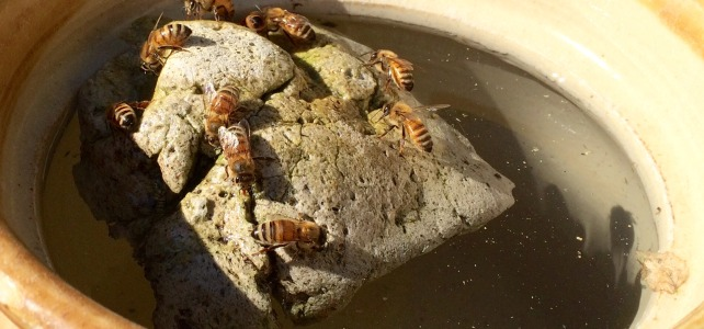 Water for Bees