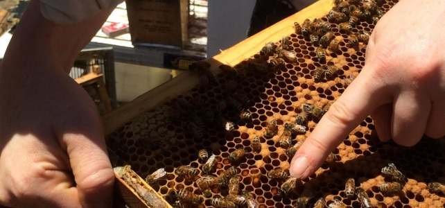 Tocal Beekeeping Field Day