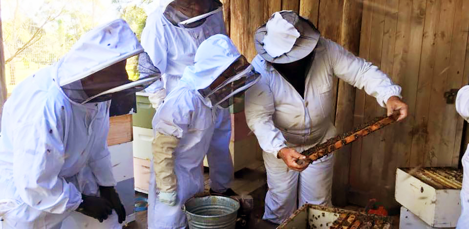 Revival of beekeeping