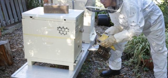 Ancient hobby of beekeeping has Coasties all abuzz in May